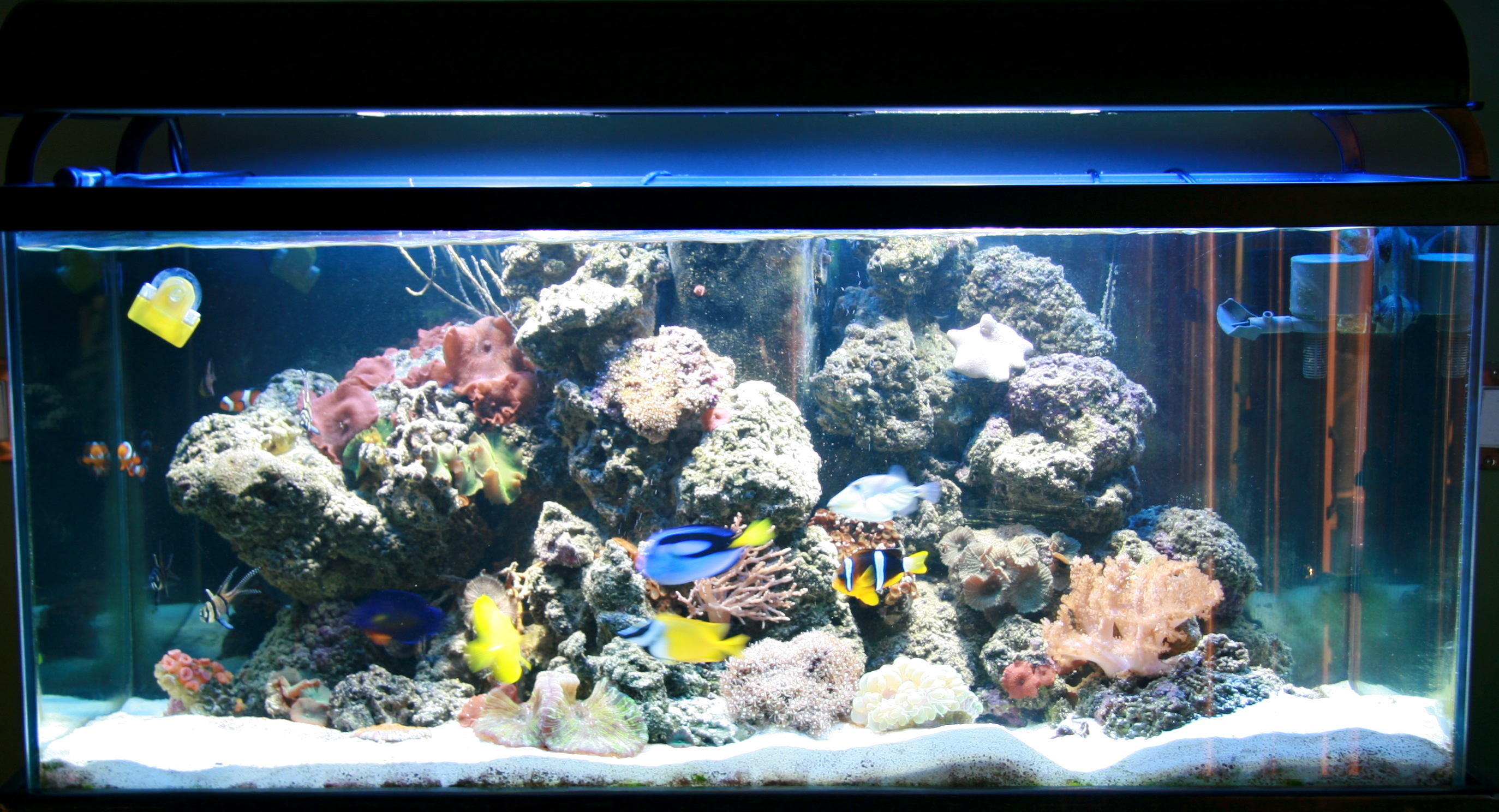 Saltwater aquarium - How Do You Set Up A Saltwater Aquarium