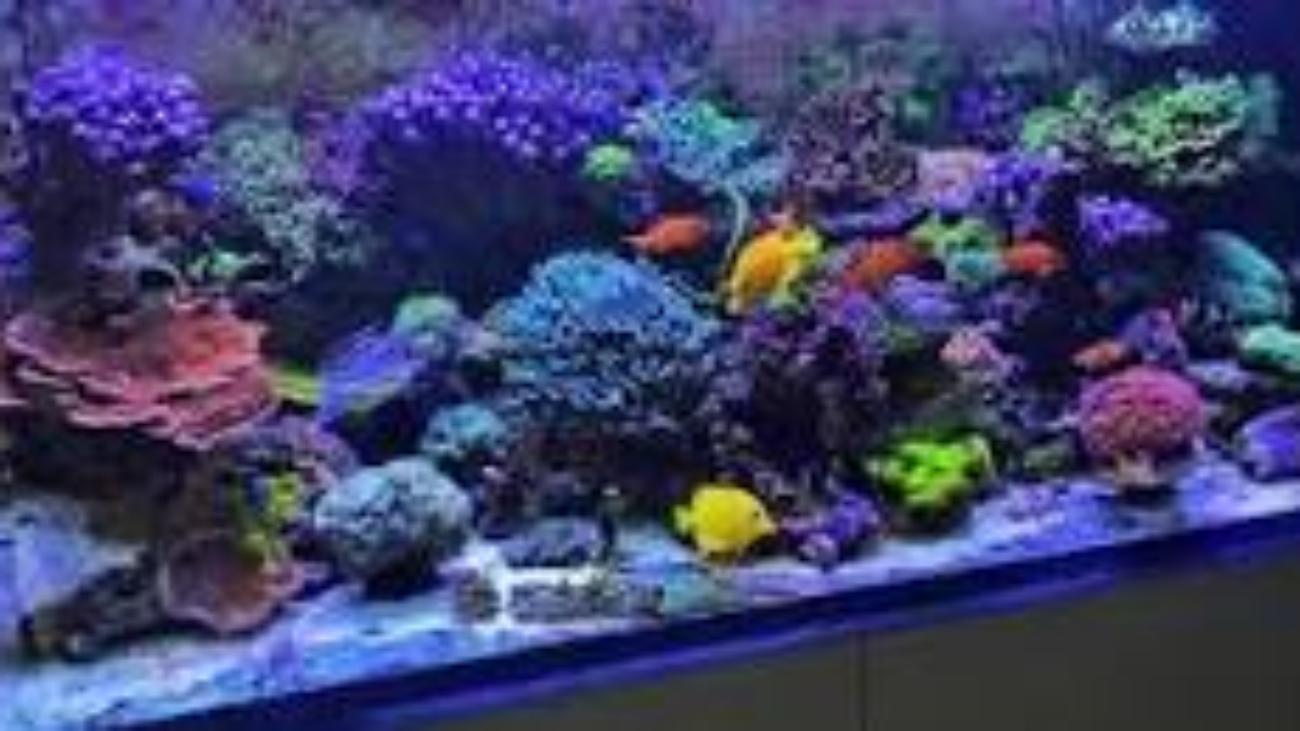 Reef tank image